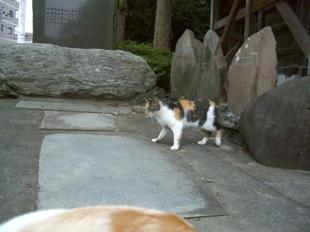 shrine03.jpg