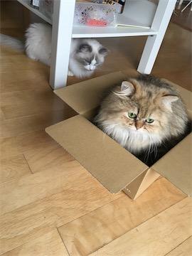 box04.jpg