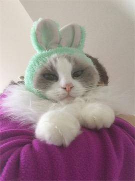 rerun rabbit 04.jpg