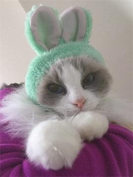 rerun rabbit 05.jpg